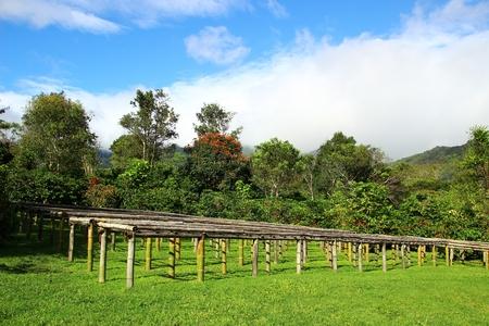 A coffee farm in Boquete, Panama