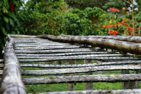 fairtrade: Bamboo raised beds for drying coffee in Boquete, Panama Stock Photo