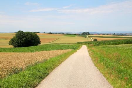 road in fields Stock Photo