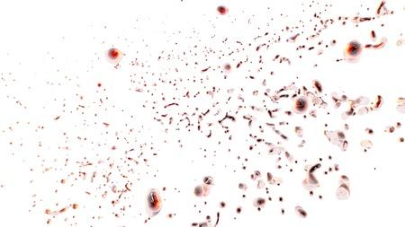 erythrocyte: eritrociti