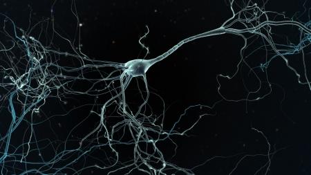 amplification: Neuron espace, le concept de neurones et le syst�me nerveux
