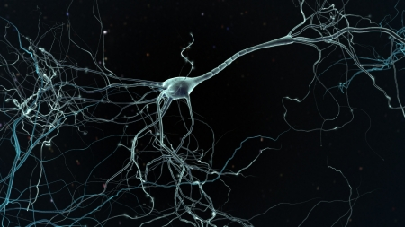 Neuron space, concept of neurons and nervous system