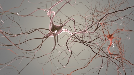 Neuron cells network, visualisation of neurons and nervous system photo