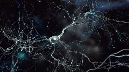 amplification: R�seau de cellules Neuron, le concept de neurones et le syst�me nerveux