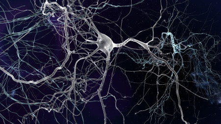 Neuron cells network, concept of neurons and nervous system Stock Photo - 19098068