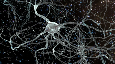 Neuron cells network, concept of neurons and nervous system photo