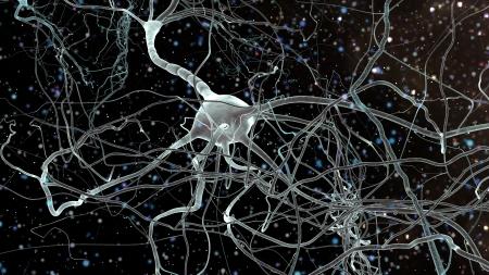 Neurona c?lulas de la red, el concepto de las neuronas y el sistema nervioso