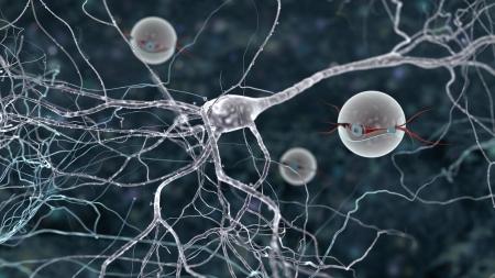 amplification: transmission du signal nano bots observation entre deux neurones