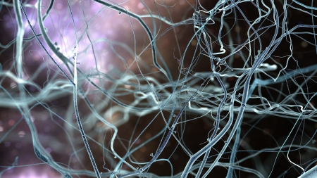 Neuron cells network, concept of neurons and nervous system Archivio Fotografico