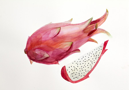 dragon fruit: Dragon Fruit isolated on white, hand drawn watercolor painting Stock Photo