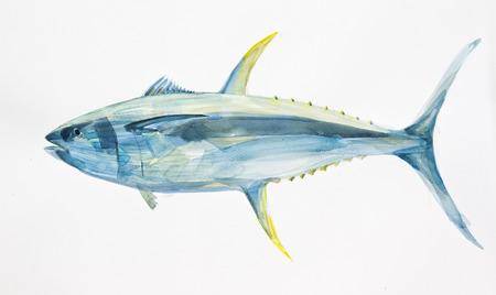 atun: aleta amarilla mano atún océano dibujado con acuarelas Foto de archivo