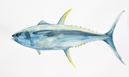 tuna: yellow fin ocean tuna fish hand drawn with watercolors