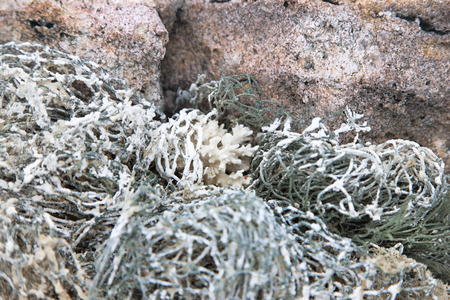 fishermans net: old dry fishermans net covered with sea salt and white coral