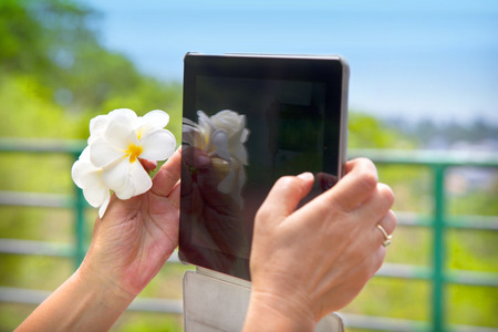 adult persons hands holding a tablet PC and pretty white flowers photo