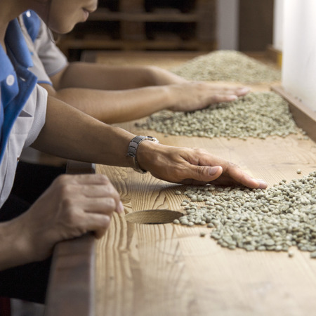 sort out: green raw coffee beans being sorted out by young women Stock Photo