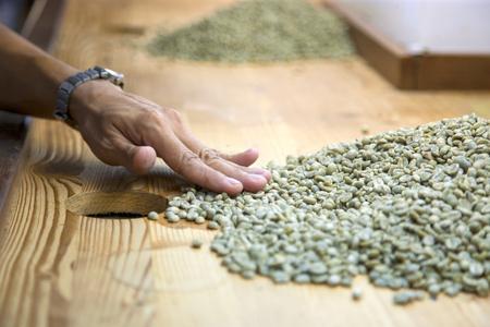 Hand sorteer een aantal groene ruwe koffiebonen uit Stockfoto