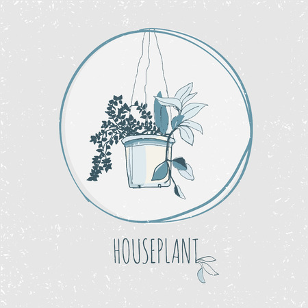 house plant: vintage style house plant hand drawn sketch Illustration