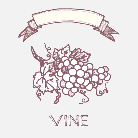 grapevine: grapevine vintage hand drawn sign and blank ribbon for text