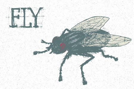 vermin: hand drawn vector insect - angry and dirty huge fly