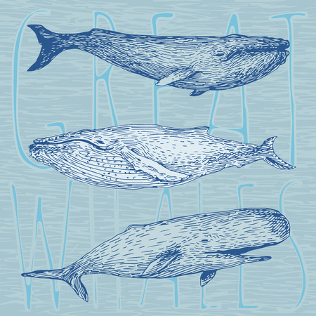 dirty t shirt: Set of hand drawn vector illustrations of giant whales