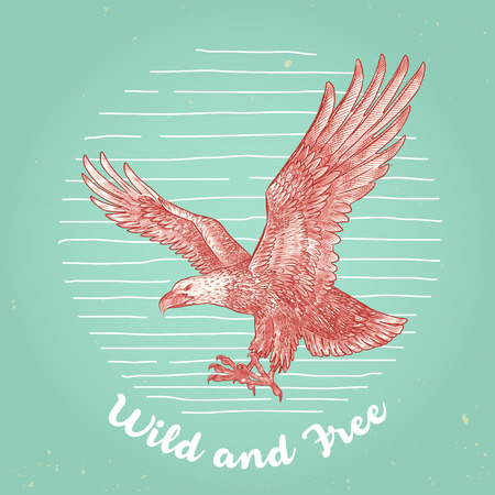 eagle flying: hand drawn vintage style vector flying eagle