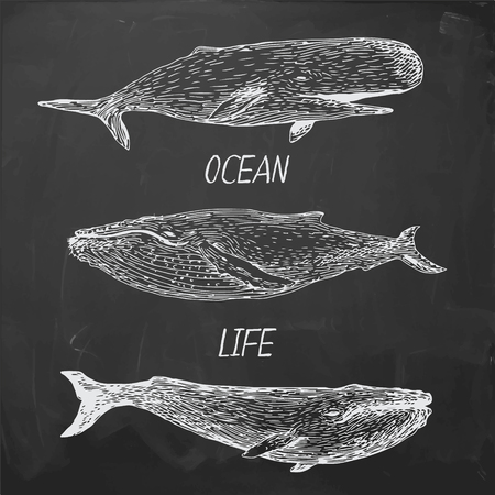 cachalot: set of vintage style hand drawn whales on black board background