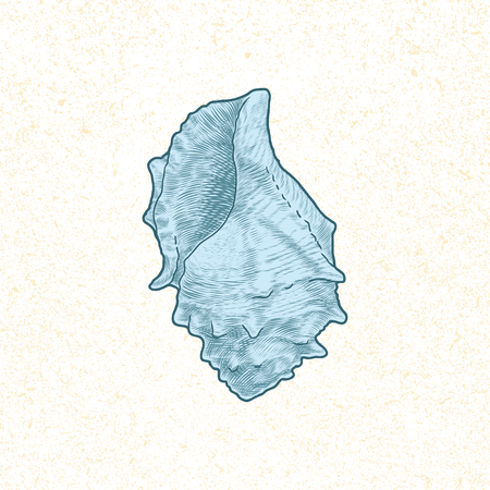 cockle: single seashell hand drawn vintage vector illustration