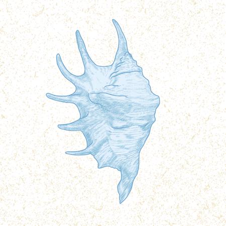 cockleshell: single seashell hand drawn vintage vector illustration