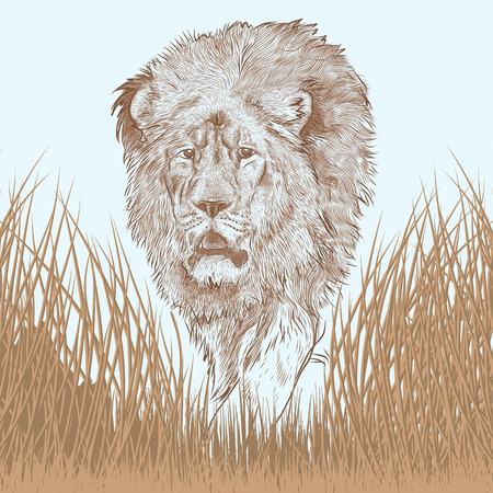 portait: very detailed portait of a great lion walking in savanna Illustration
