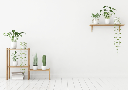 Empty white interior in scandinavian style with green plants in pots on wooden rack. 3d rendering. 스톡 콘텐츠