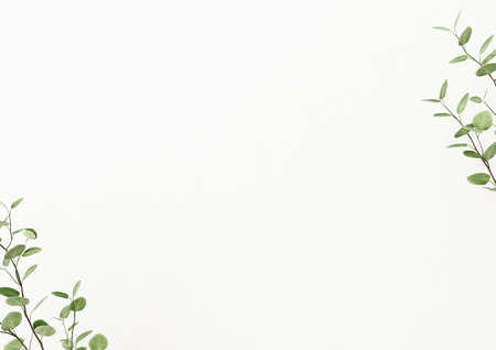 Interior wall mockup decorated with plant branches with green leaves in the corners on empty white background. 3D rendering, illustration.