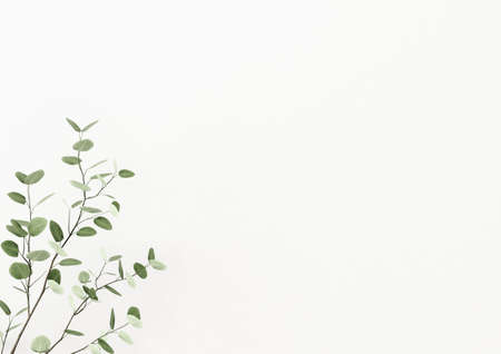 Interior wall mockup decorated with plant branch with green leaves in the left corner on empty white background. 3D rendering, illustration.