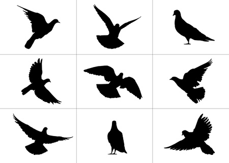 viewpoints: 9 realistic silhouettes of pigeons: flying and standing still from different viewpoints