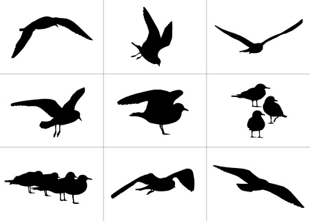 viewpoints: 9 realistic silhouettes of seagulls: flying and standing, alone and in group from different viewpoints