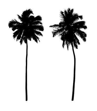 two black silhouettes of beautiful coconut trees