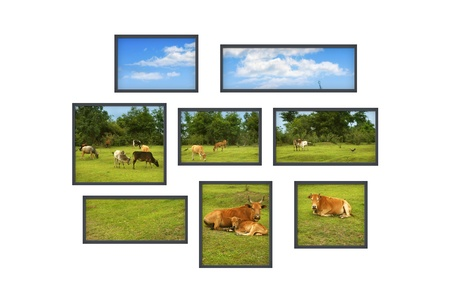 composition of several isolated windows of different size on a white wall with a view on beautiful rural landscape photo