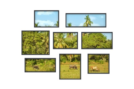 composition of several isolated windows of different size on a white wall with a view on a jungle landscape photo