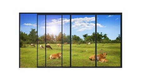 農村の景観とファーム動物と現代アルミニウム ウィンドウのスライド パノラマの 4 つの部分の分離