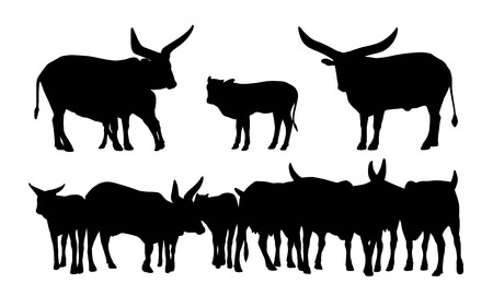 realistic silhouettes of a sacred african cows, males, females, babies and their group
