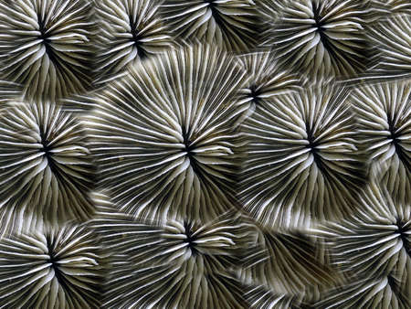 plancton: Coral de fondo