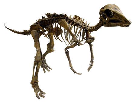 dinosaur Stock Photo - 770042