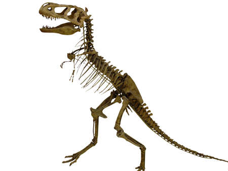 the skeleton of the dinosaur
