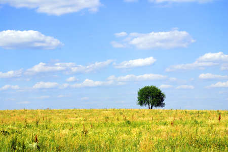 solitary tree on the field Stock Photo - 1328226