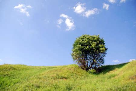 solitary tree Stock Photo - 1328228