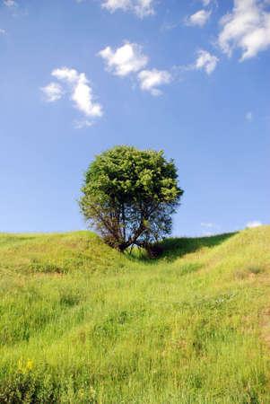 solitary tree Stock Photo - 1328242
