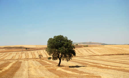 the field in Spain Stock Photo - 1952559