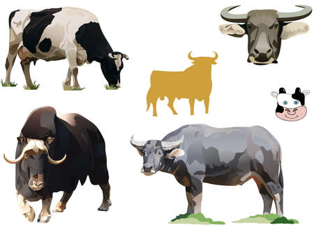 the illustration of bulls and cows Stock Photo