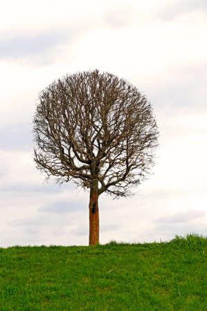 the bare tree Stock Photo - 4850127