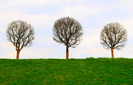 the image of bare tree Stock Photo - 5824942