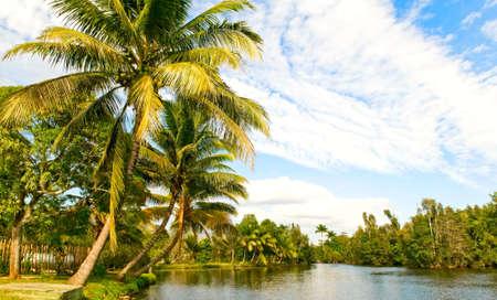 tropical landsape photo